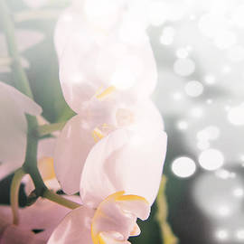 Lali Kacharava - Pink orchids in light