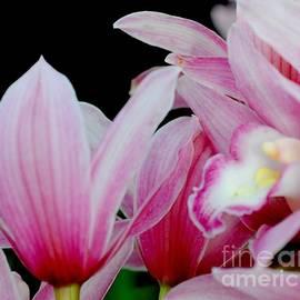 Kathleen Struckle - Pink Orchids