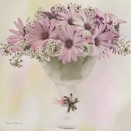 Sandra Foster - Pink Osteospernum Flowers