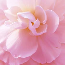 Jennie Marie Schell - Pink Pastel Begonia Flower