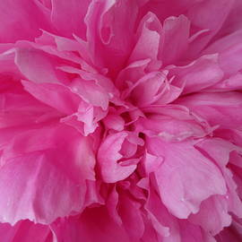 Diannah Lynch - Pink Peony