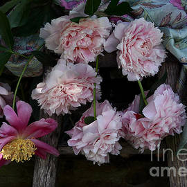 Luv Photography - Pink Peony Flowers