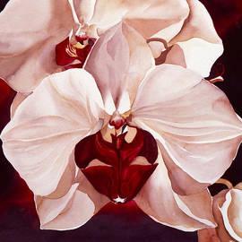 Alfred Ng - Pink Phoalenopsis Orchid