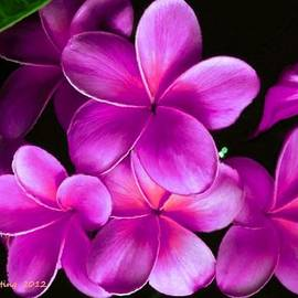 Bruce Nutting - Pink Plumeria