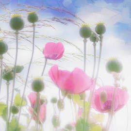 Hal Halli - Pink Poppies In A Paper Tissue Sky