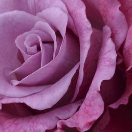 Cheryl Miller - Pink Rose . 1.2