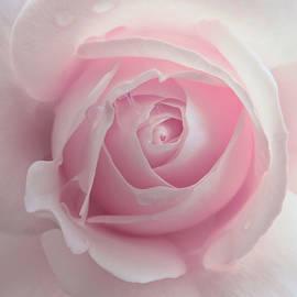 Jennie Marie Schell - Pink Rose Flower Macro
