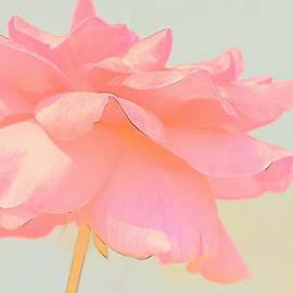 Kathy Barney - Everythings Rosy