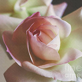 Janice Rae Pariza - Pink Rose