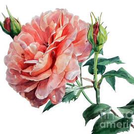 Greta Corens - Pink Rose Odette