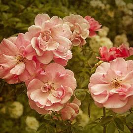 Robert Murray - Pink Roses