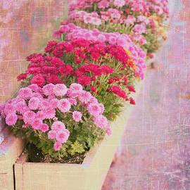 Karen Stephenson - Pink Sidewalk Flowerbox
