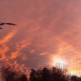 Charlotte Gray - Pink sky