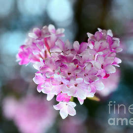 Sabine Jacobs - Pink Spring Heart