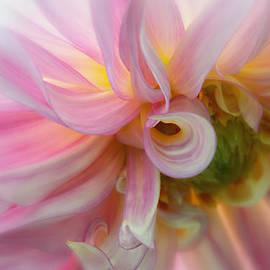 Mary Jo Allen - Pink Swirl Glow