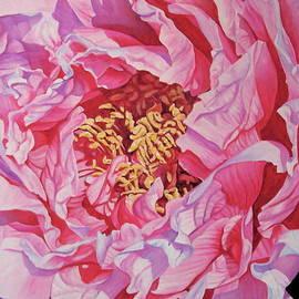 Lillian  Bell - Pink Tree peony