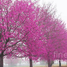 ArtyZen  Studios - Pink Trees Art Print