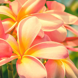 Sharon Mau - Pink Tropical Plumeria Maui Hawaii