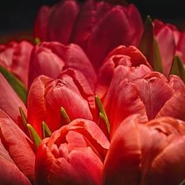 Kristina Deane - Fucshia Tulips