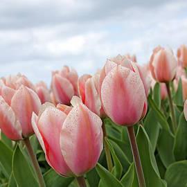 Maria Meester - Pink tulips