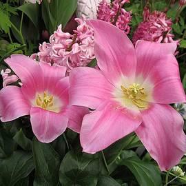 MTBobbins Photography - Pink Tulips