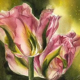 Alfred Ng - Pink Tulips With Yellow