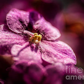Bob and Nancy Kendrick - Pink Violet Glory