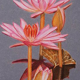 Marna Edwards Flavell - Pink Water Lilies