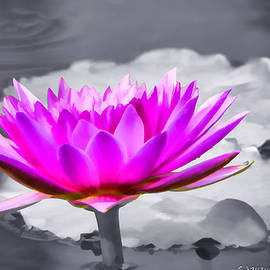 rdm-Margaux Dreamations - Pink Water Lilly