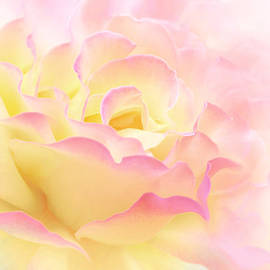 Jennie Marie Schell - Pink Yellow Rose Flower Abstract