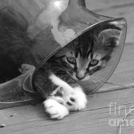 Tannis  Baldwin - Pitcher Kitten