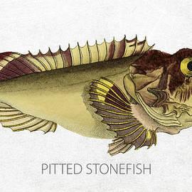 Pitted stonefish