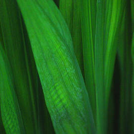Raphael Bruckner - Plant 2