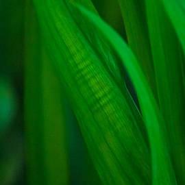 Raphael Bruckner - Plant1