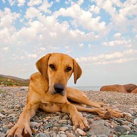Leyla Ismet - Playful Dog On The Beach