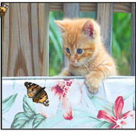 Tina M Wenger - Playful Kitties