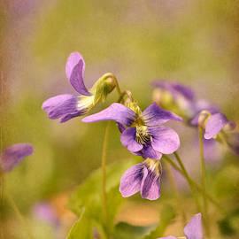 Lois Bryan - Playful Wild Violets