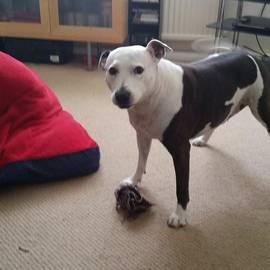 Flick Chalmers - Playtime #dogsofinstagram #pooch #love