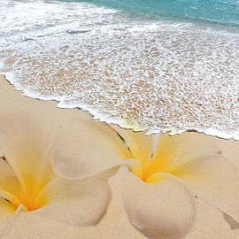 Athena Mckinzie - Plumeria Beach