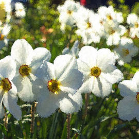 Georgia Mizuleva - Poet Daffodils Dreams - Impressions Of Spring