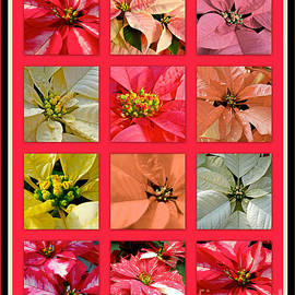 Mother Nature - Poinsettias