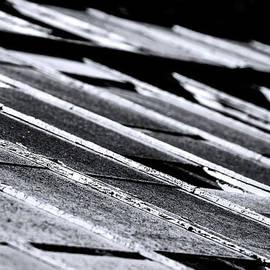 Denise Dube - Pollen Tiles by Denise Dbe