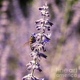 Janice Rae Pariza - Pollinating Purple Lavender