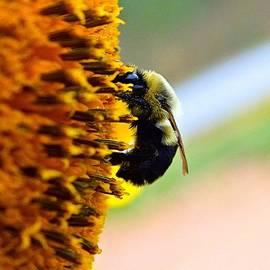 Christy Ricafrente - Pollinator