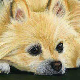 Sarah Dowson - Pomeranian Dog