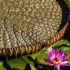 Steven Parker - Pond Flora