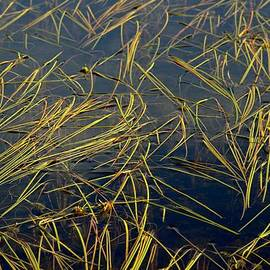 Marv Russell - Pond Grass