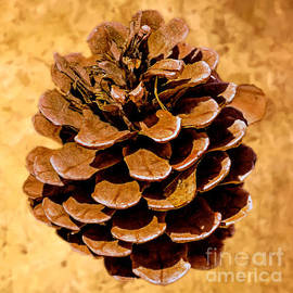 Bob Johnston - Ponderosa Pine Cone Painting