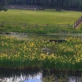 Teresa A Lang - Ponds and Pastures