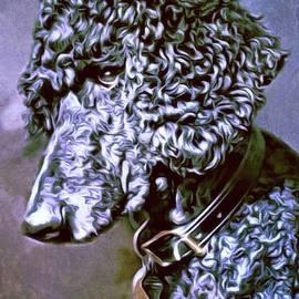 Scott Wallace - Poodle Portrait